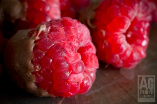 Macro Chocolate Raspberries