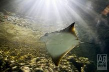 Kelly Tarltons Underwater World Sting Ray