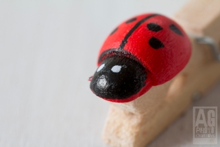 Lady Bird Peg
