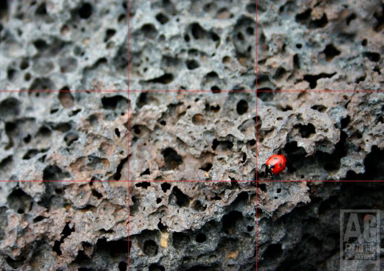 Ladybug on Lava