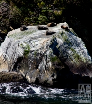 Seal Rock Milford Sound