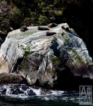 Seal Rock Milford Sound