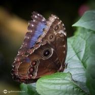 butterfly-creek-15