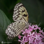 butterfly-creek-17