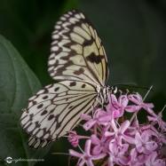 butterfly-creek-17