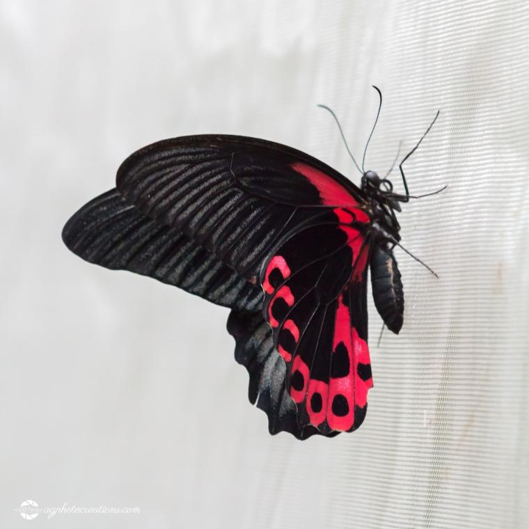 butterfly-creek-25