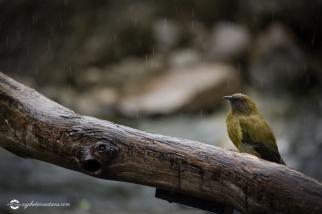 nz-birds01