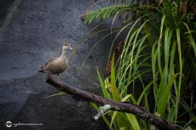 nz-birds02