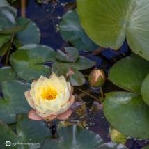 wrightswater-gardens03
