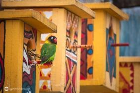 zoo-feb17-02