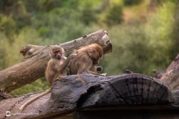 zoo-feb17-10