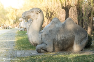 Camel at Rest on the Sacred Way to the Ming Tombs Beijing China