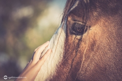 Close Up Of Childs Hand Touching Face of Horse Selective Focus