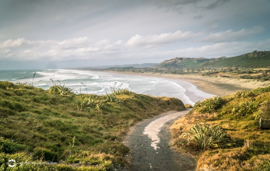 View looking North to Murawai Beach With Winding Path in the Foreground, in Auckland New Zealand